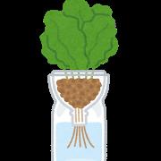2020.9.12 plant_petbottle_suikou_saibai.png